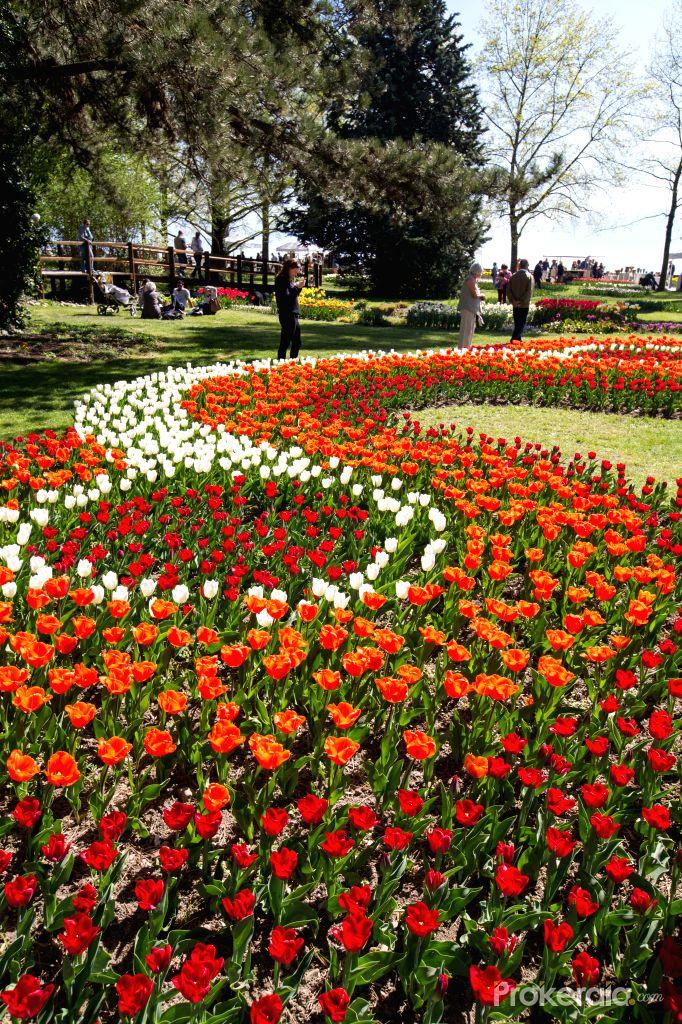 Morges tulip fesitval